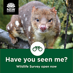 Poster for the community wildlife survey, featuring a quoll