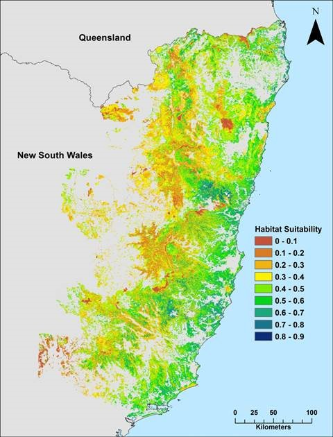 Map of koala habitat suitability in north-east NSW (red is lowest habitat suitability, yellow and green are moderate suitability and blue is highest habitat suitability)